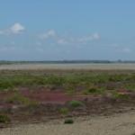 paysage de sansouire CAMARGUE