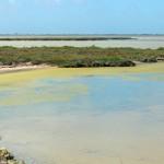 étang de Formelet CAMARGUE