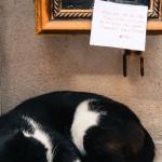 chat dans la vitrine