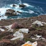 lande +lichens à CROZON