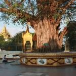 pagode SHWEDAGON Bodhi sacré