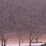 SOSSUSVLEI dunes contre jour
