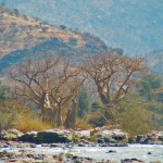 baobabs à EPUPA