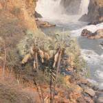 chutes EPUPA palmiers