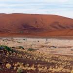 dunes SOSSUSVLEI #1