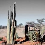 lieu dit SOLITAIRE NAMIBIE