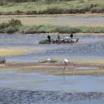 cormorans et goelands